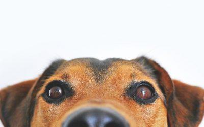 Tájékoztatás állatorvosi rendelésről